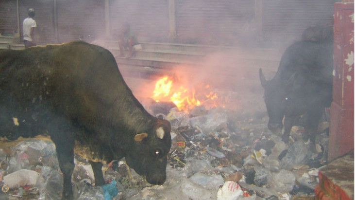 Dioxins & why you dont want to be burning plastic