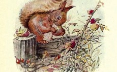 squirrels eating plastic