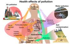 Persistant Organic Pollutants