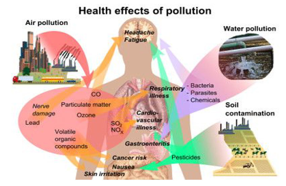 Plastic and Persistant Organic Pollutants