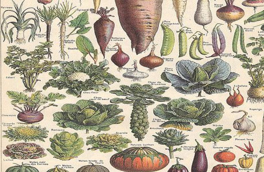Seed - harvested
