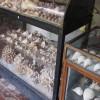 Corals & Micro Plastics