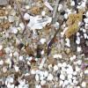 Micro-plastics & pollution
